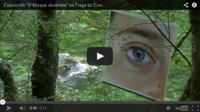 O Bosque Obsérvate